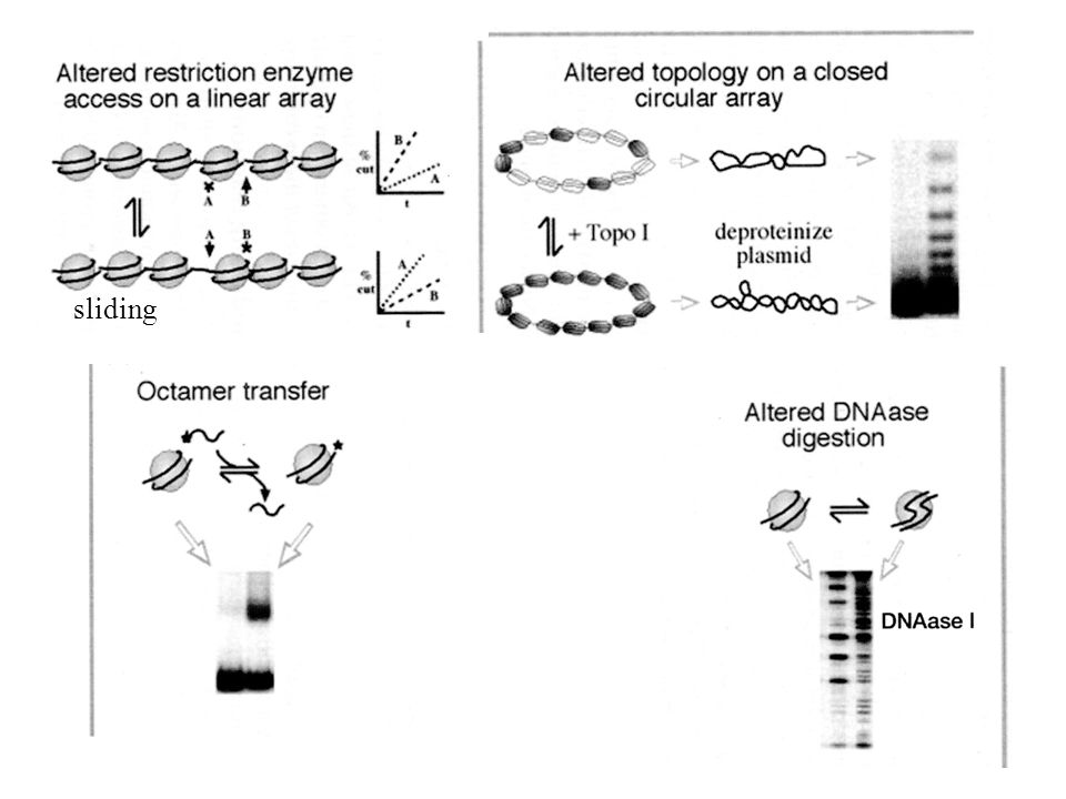sliding Domains of SNF2-like ATPase