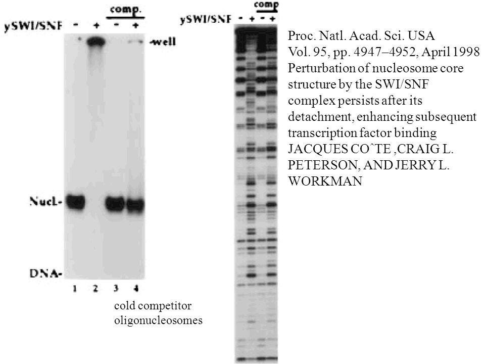 Perturbation of nucleosome core structure by the SWI/SNF