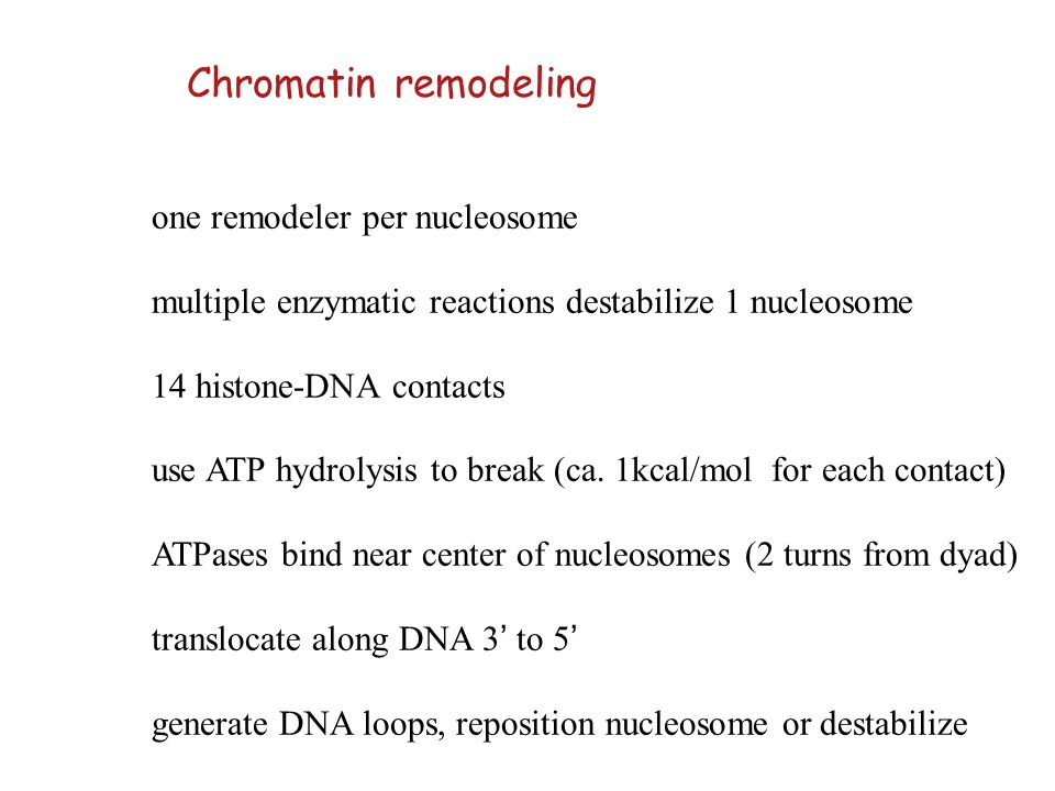 Chromatin remodeling one remodeler per nucleosome