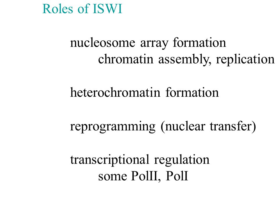 nucleosome array formation chromatin assembly, replication