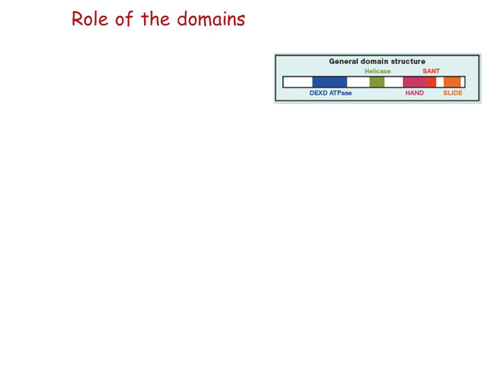 Role of the domains