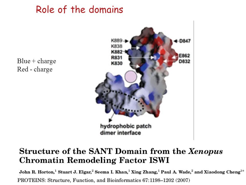 Role of the domains Blue + charge Red - charge