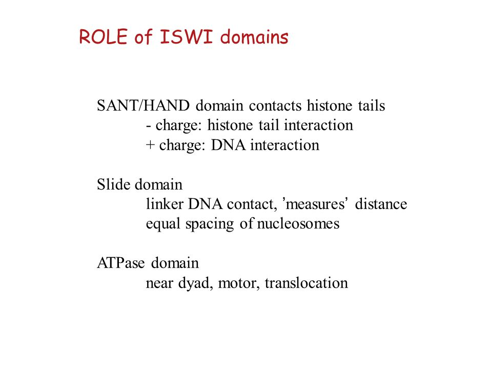 ROLE of ISWI domains SANT/HAND domain contacts histone tails