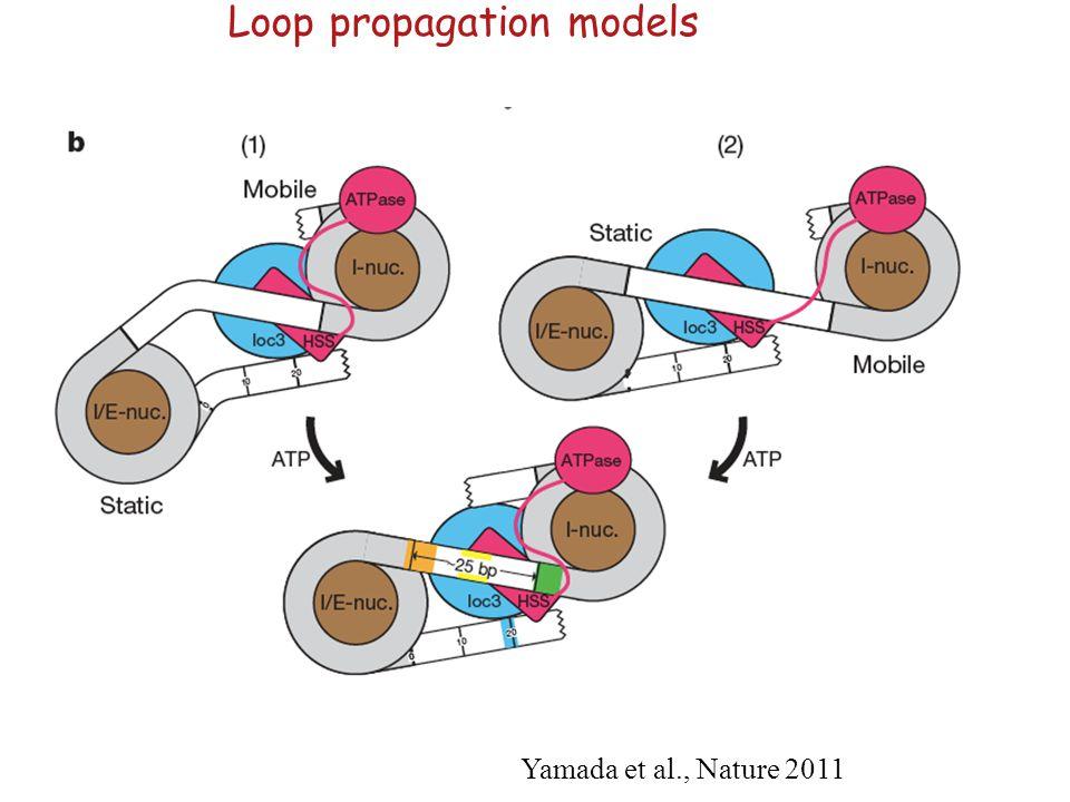 Loop propagation models