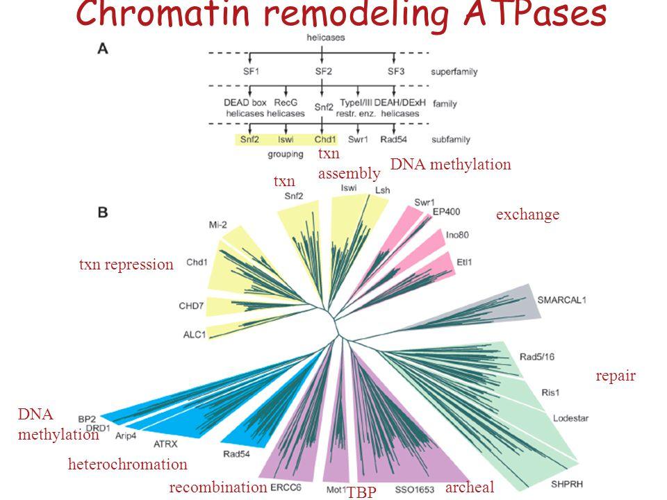 Chromatin remodeling ATPases