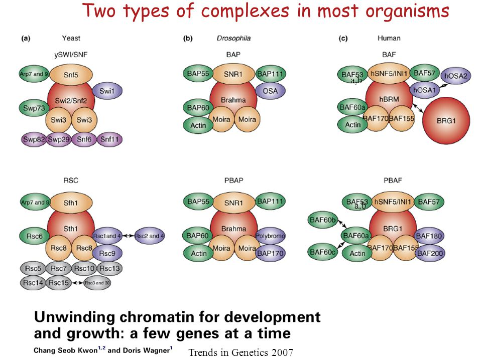 Two types of complexes in most organisms