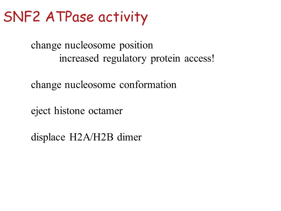 SNF2 ATPase activity change nucleosome position