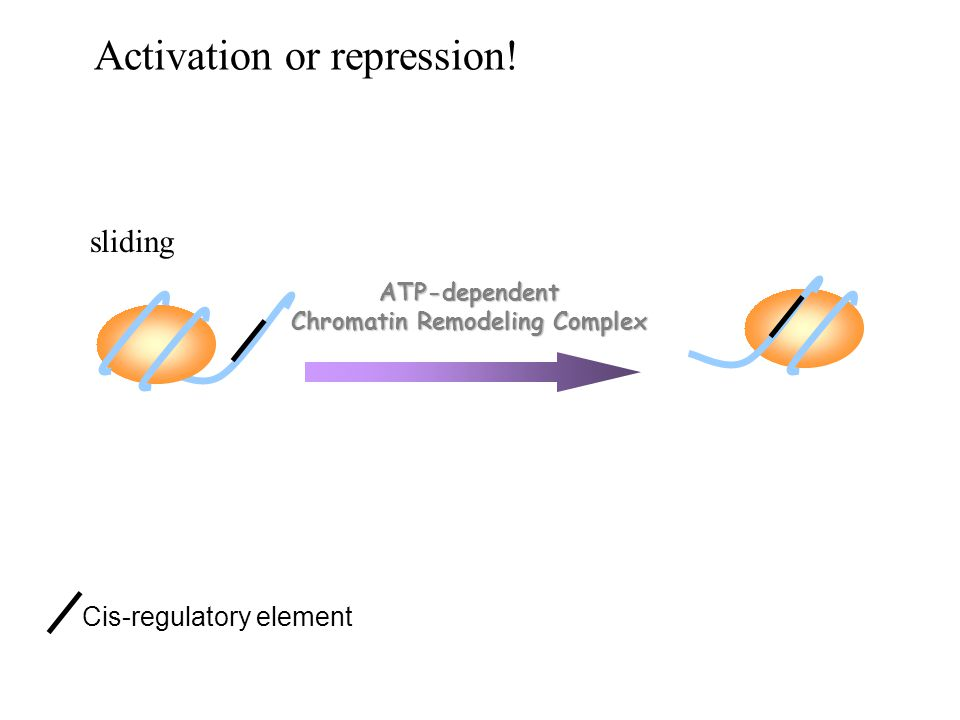Chromatin Remodeling Complex