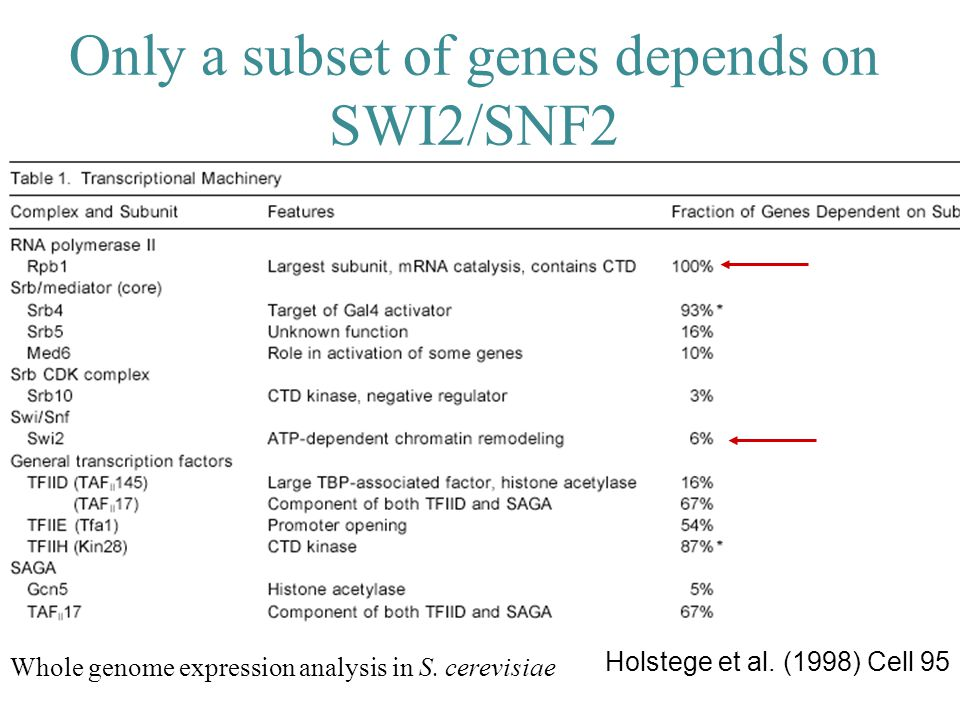 Only a subset of genes depends on SWI2/SNF2