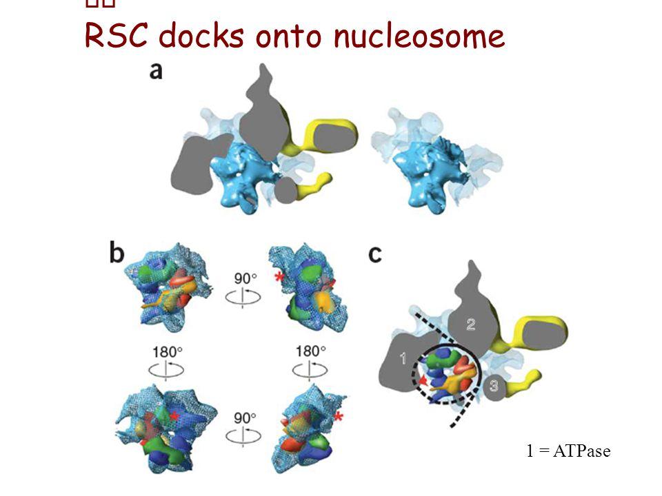 RSC docks onto nucleosome