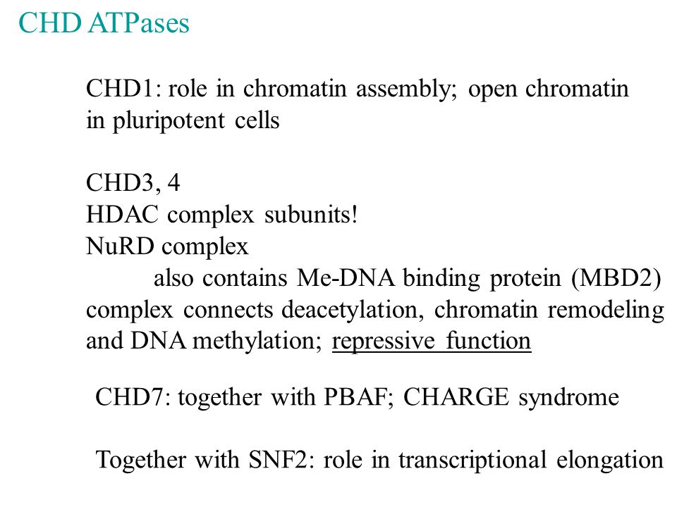 CHD ATPases CHD1: role in chromatin assembly; open chromatin