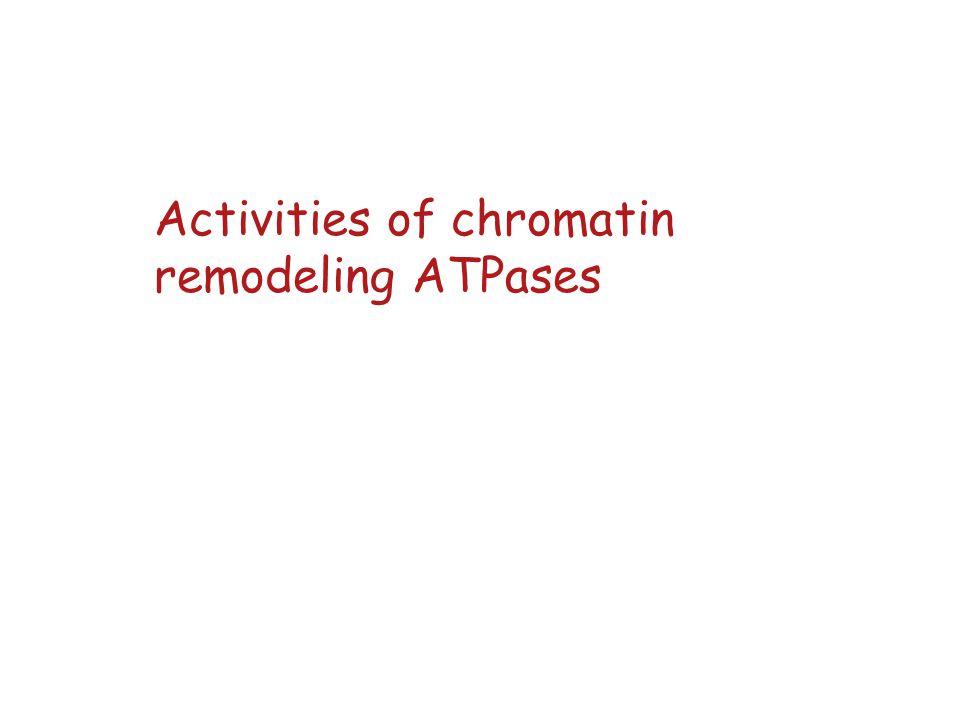Activities of chromatin