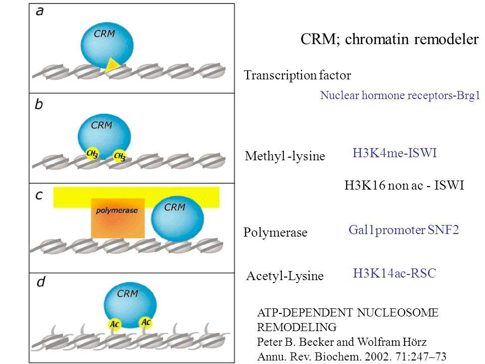 CRM; chromatin remodeler