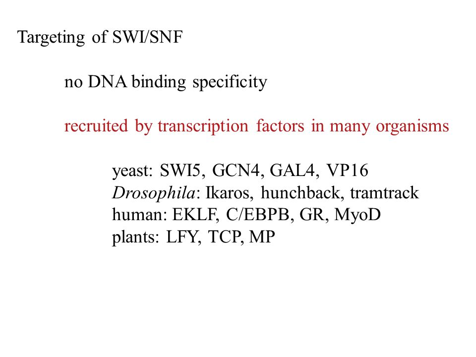 Targeting of SWI/SNF no DNA binding specificity. recruited by transcription factors in many organisms.