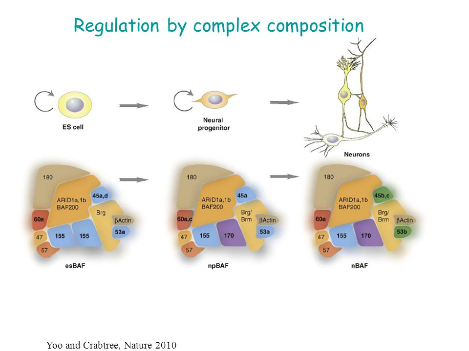 Regulation by complex composition