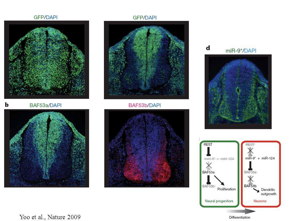 Yoo et al., Nature 2009