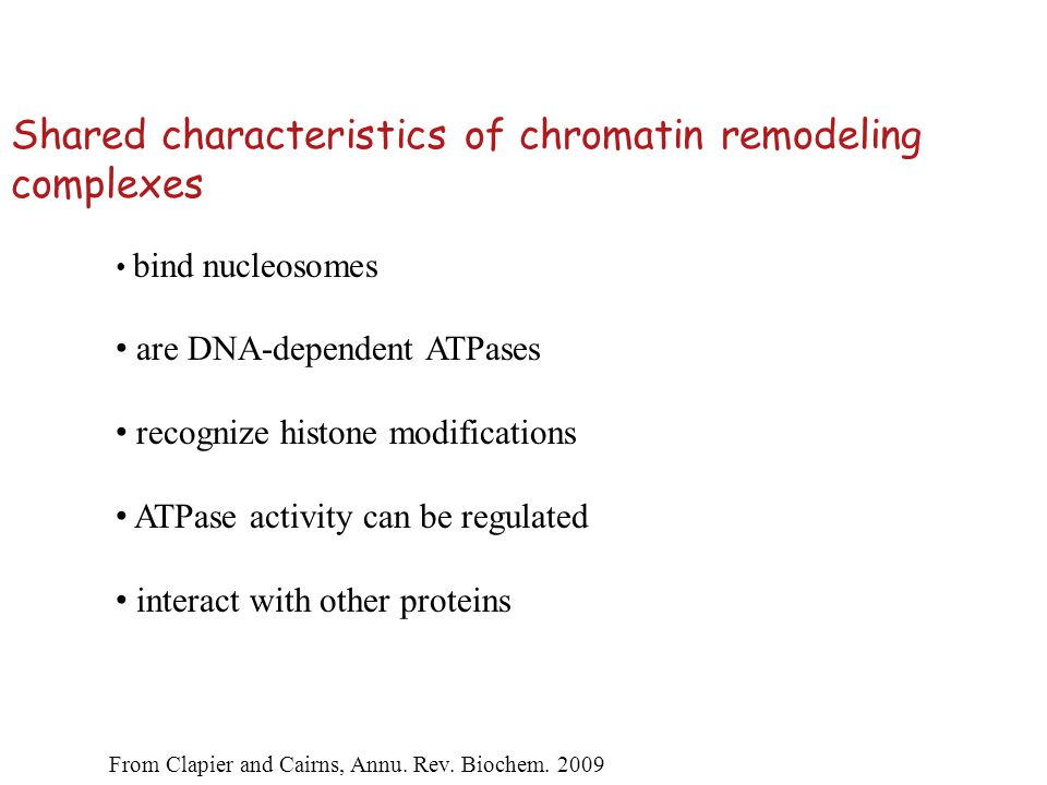 Shared characteristics of chromatin remodeling complexes