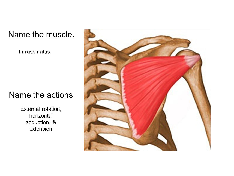 External rotation, horizontal adduction, & extension