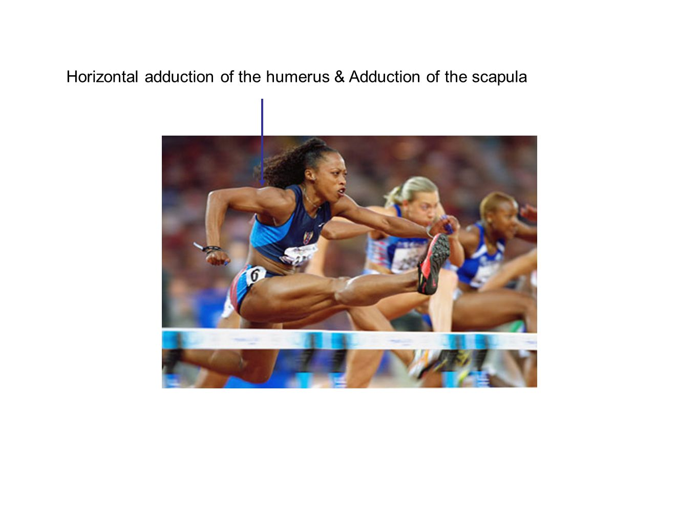 Horizontal adduction of the humerus & Adduction of the scapula