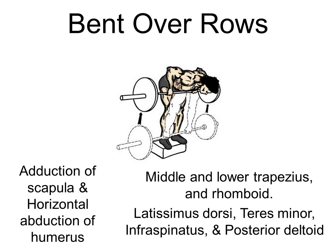Bent Over Rows Adduction of scapula & Horizontal abduction of humerus
