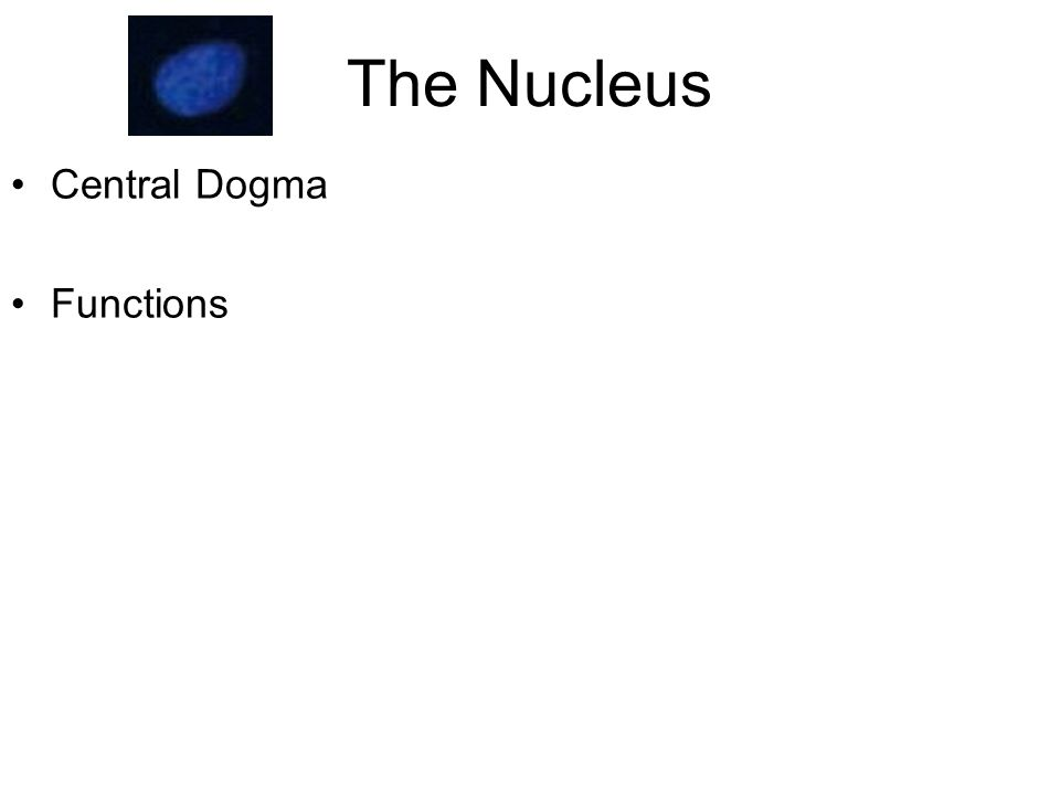 The Nucleus Central Dogma Functions