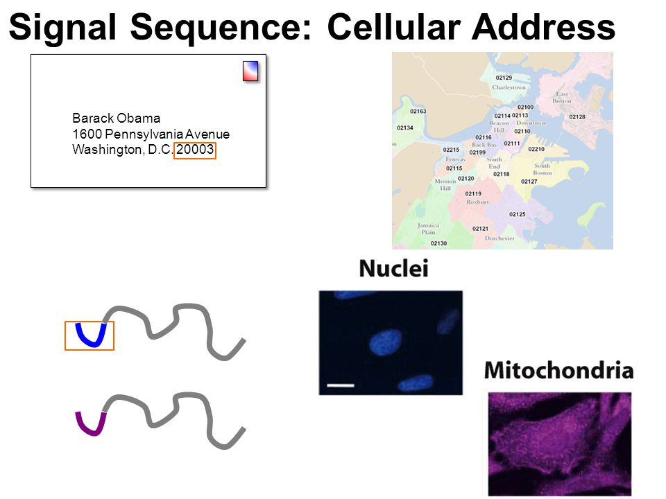 Signal Sequence: Cellular Address