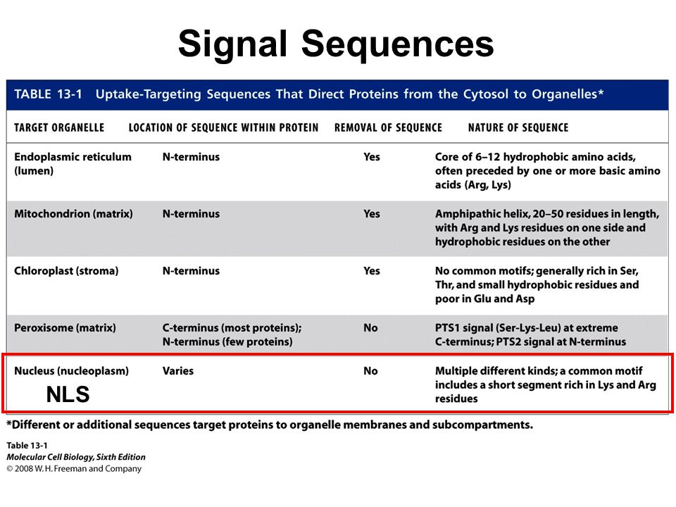 Signal Sequences NLS