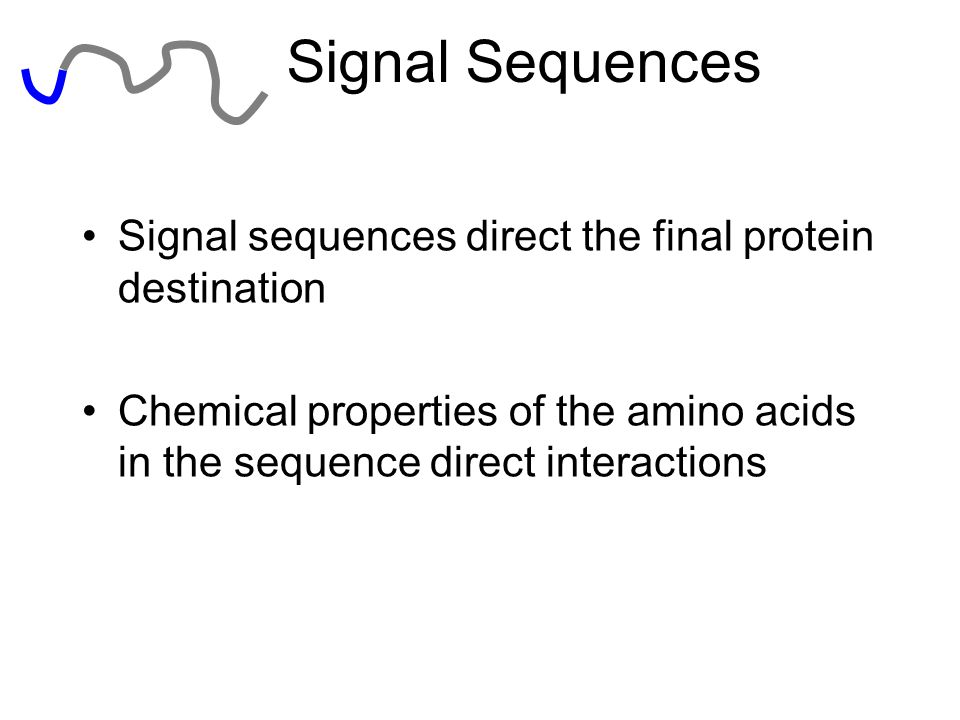 Signal Sequences Signal sequences direct the final protein destination