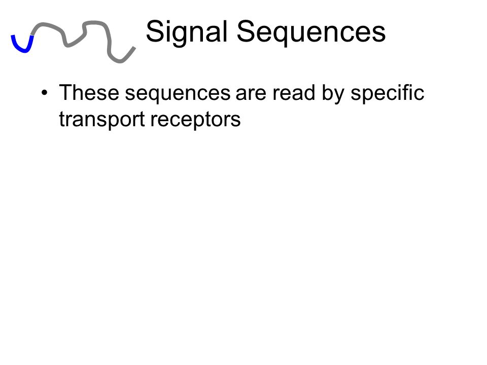 Signal Sequences These sequences are read by specific transport receptors K—Lysine R--Arginine