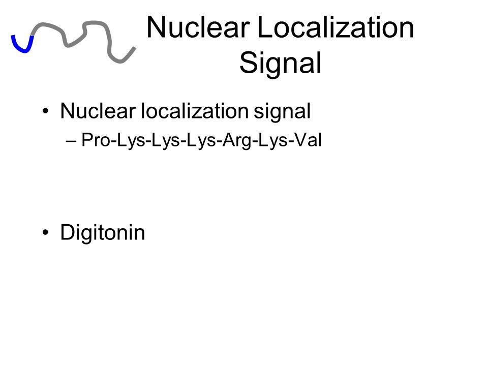 Nuclear Localization Signal