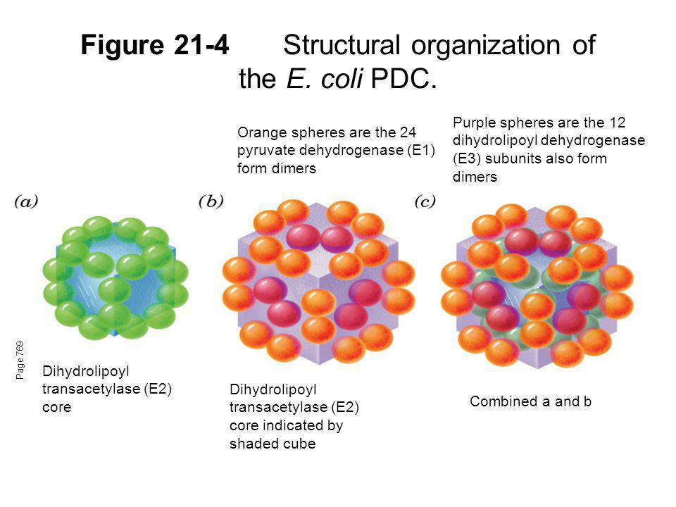 Figure 21-4 Structural organization of the E. coli PDC.