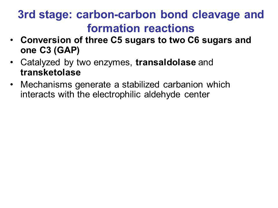 3rd stage: carbon-carbon bond cleavage and formation reactions