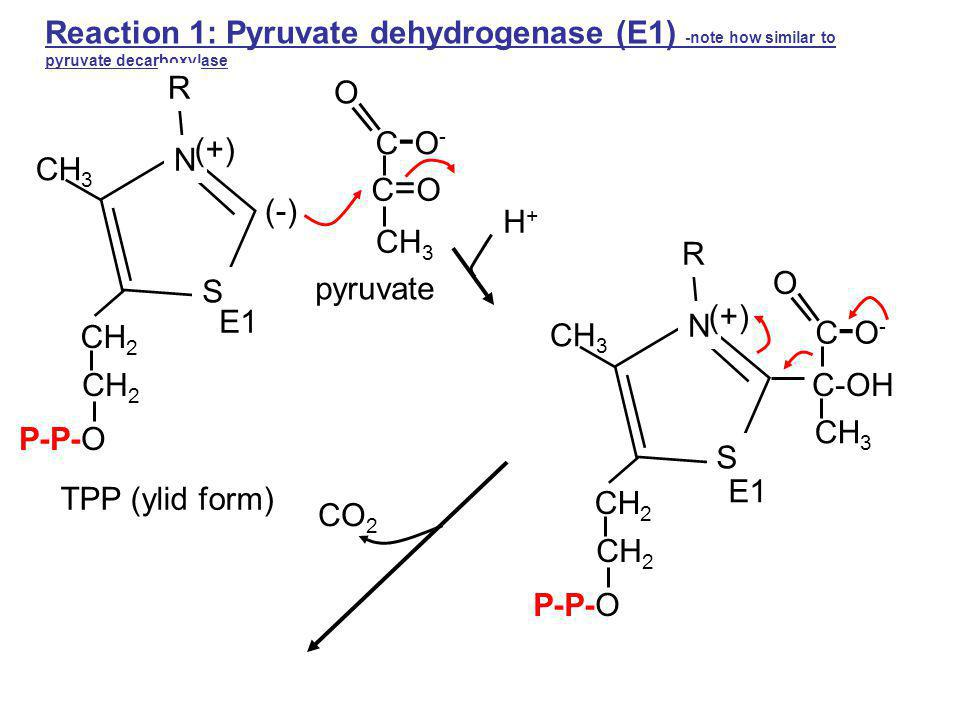 Reaction 1: Pyruvate dehydrogenase (E1) -note how similar to pyruvate decarboxylase