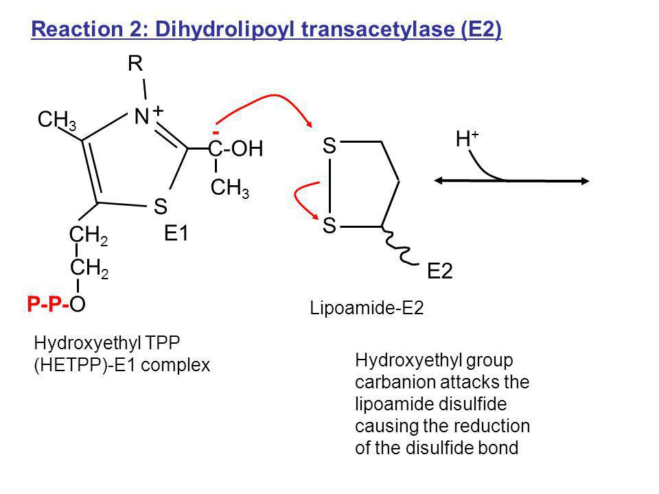 Reaction 2: Dihydrolipoyl transacetylase (E2)