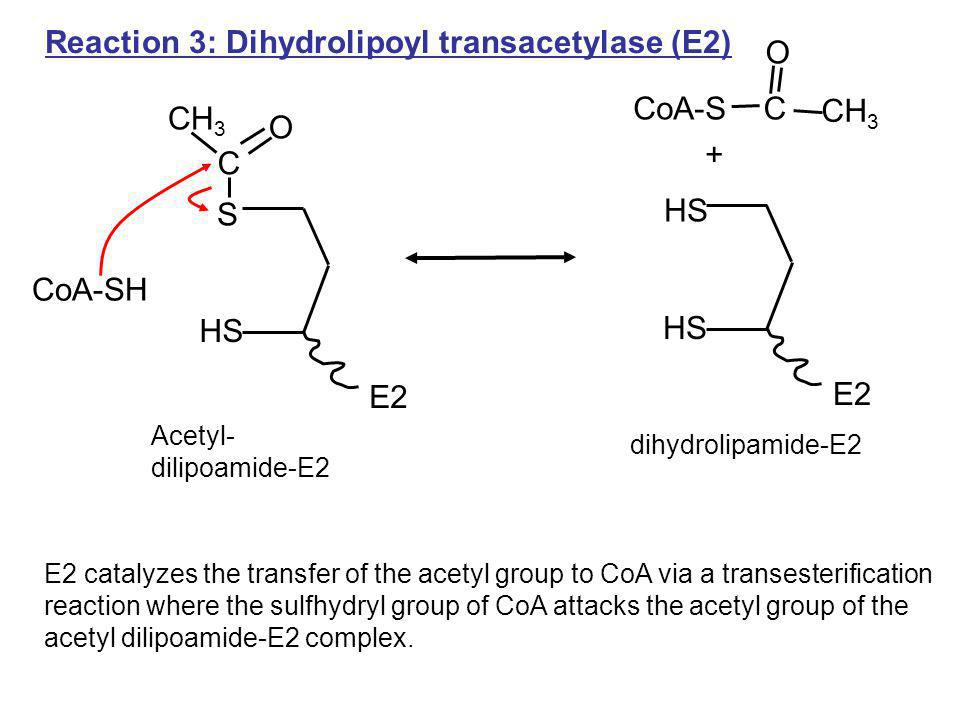 Reaction 3: Dihydrolipoyl transacetylase (E2) O