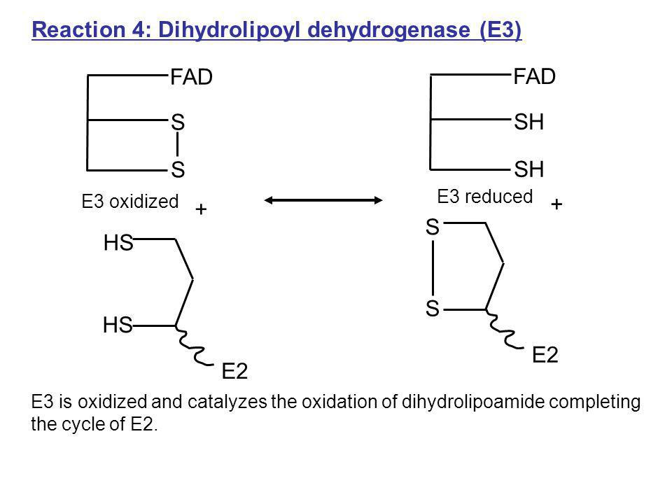 Reaction 4: Dihydrolipoyl dehydrogenase (E3)