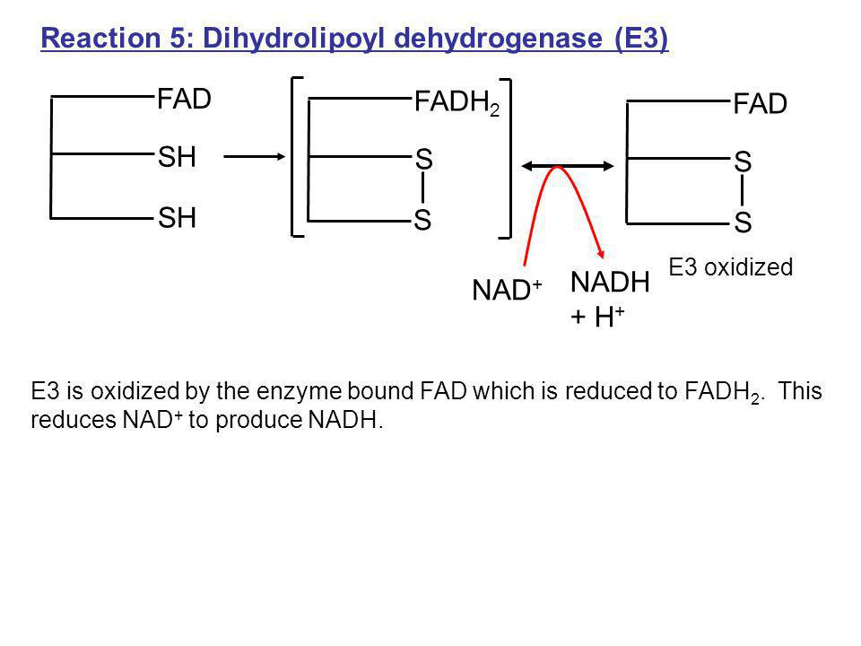 Reaction 5: Dihydrolipoyl dehydrogenase (E3)