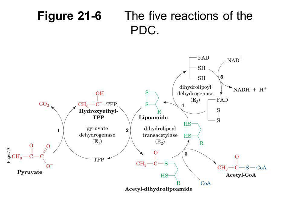 Figure 21-6 The five reactions of the PDC.