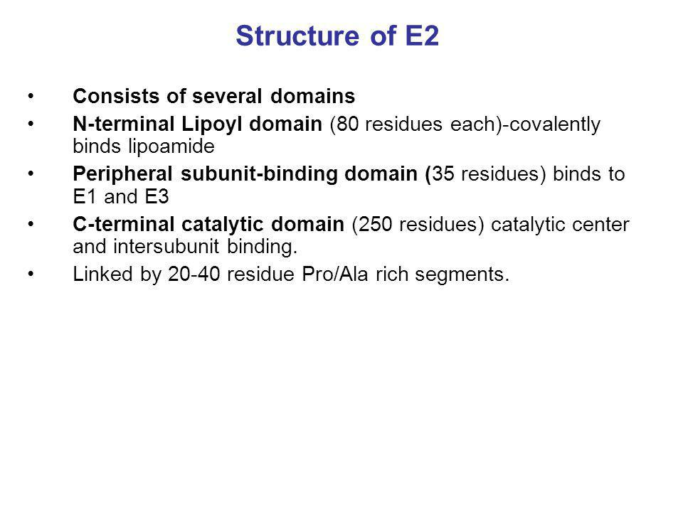 Structure of E2 Consists of several domains
