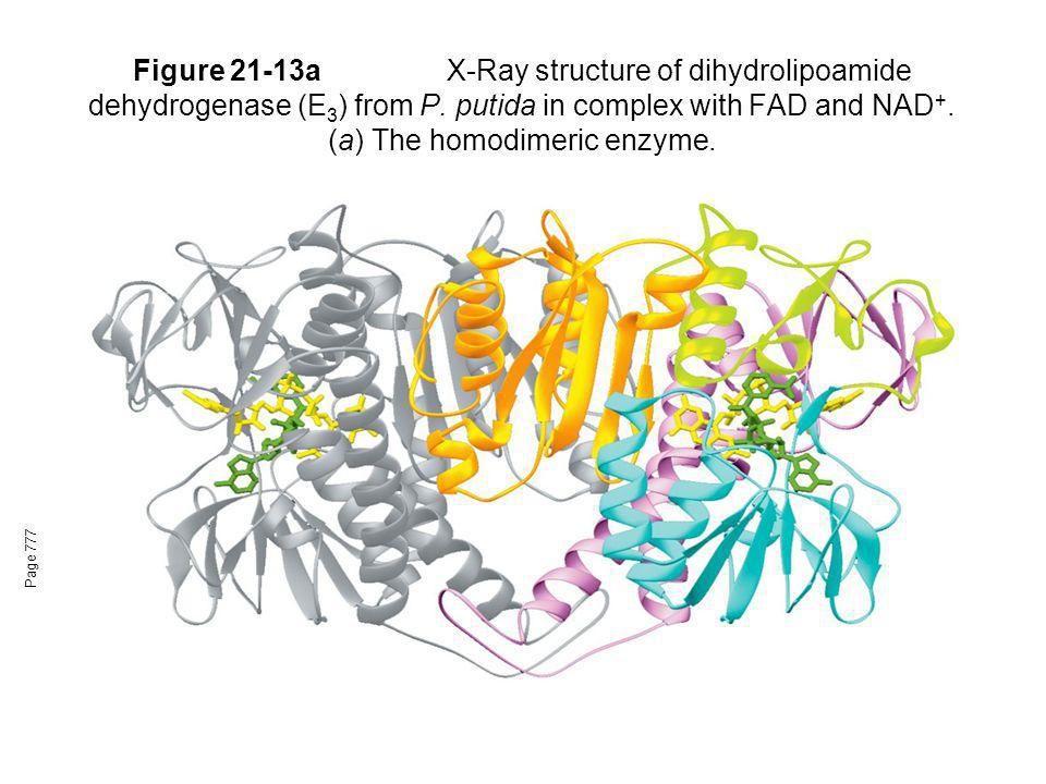Figure 21-13a X-Ray structure of dihydrolipoamide dehydrogenase (E3) from P. putida in complex with FAD and NAD+. (a) The homodimeric enzyme.