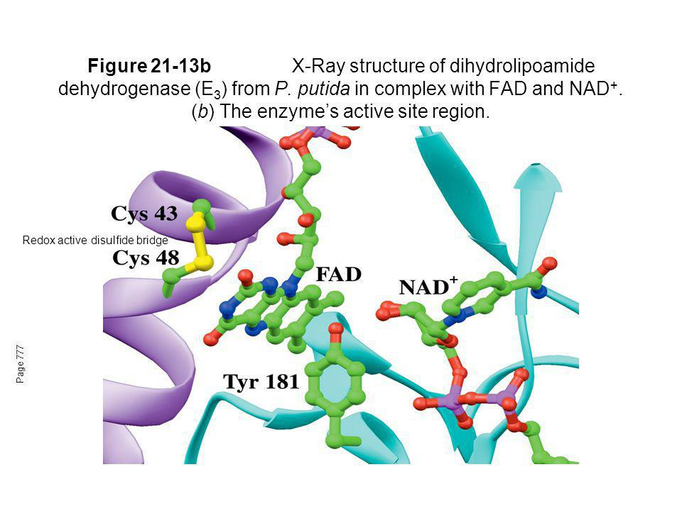 Figure 21-13b X-Ray structure of dihydrolipoamide dehydrogenase (E3) from P. putida in complex with FAD and NAD+. (b) The enzyme's active site region.
