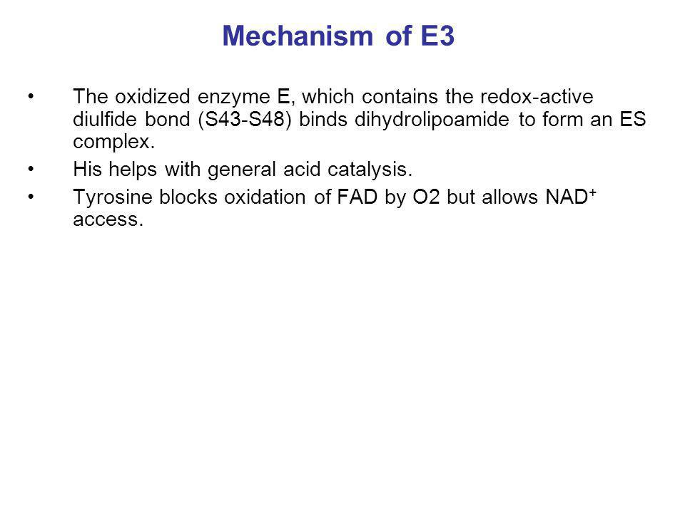 Mechanism of E3 The oxidized enzyme E, which contains the redox-active diulfide bond (S43-S48) binds dihydrolipoamide to form an ES complex.