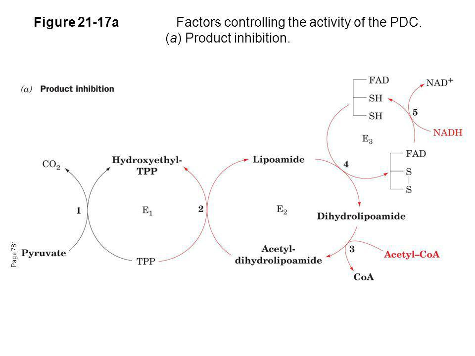 Figure 21-17a. Factors controlling the activity of the PDC