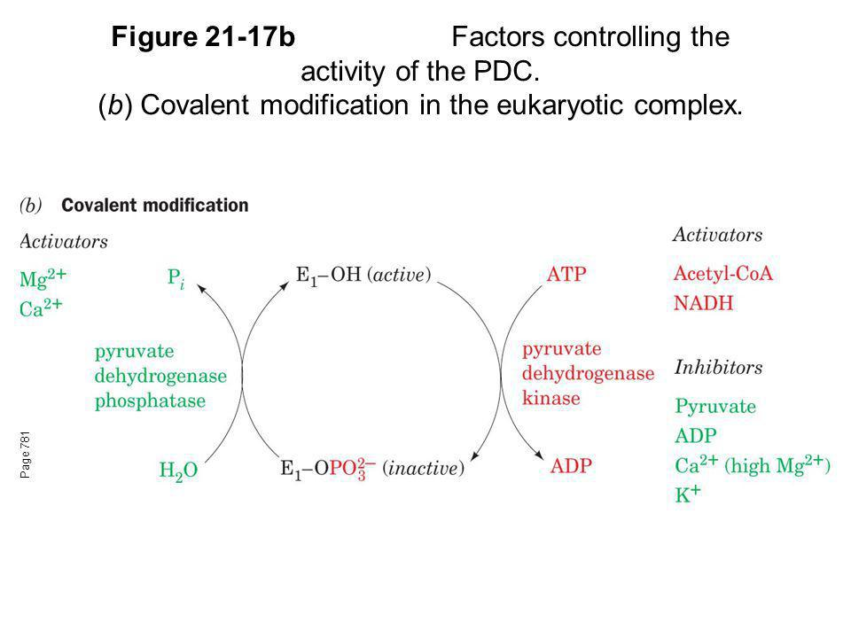 Figure 21-17b. Factors controlling the activity of the PDC