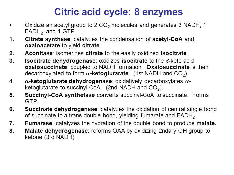 Citric acid cycle: 8 enzymes