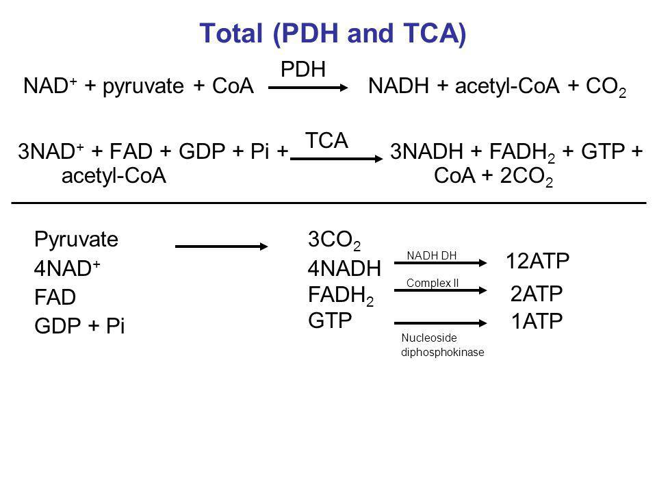 Total (PDH and TCA) PDH NAD+ + pyruvate + CoA NADH + acetyl-CoA + CO2