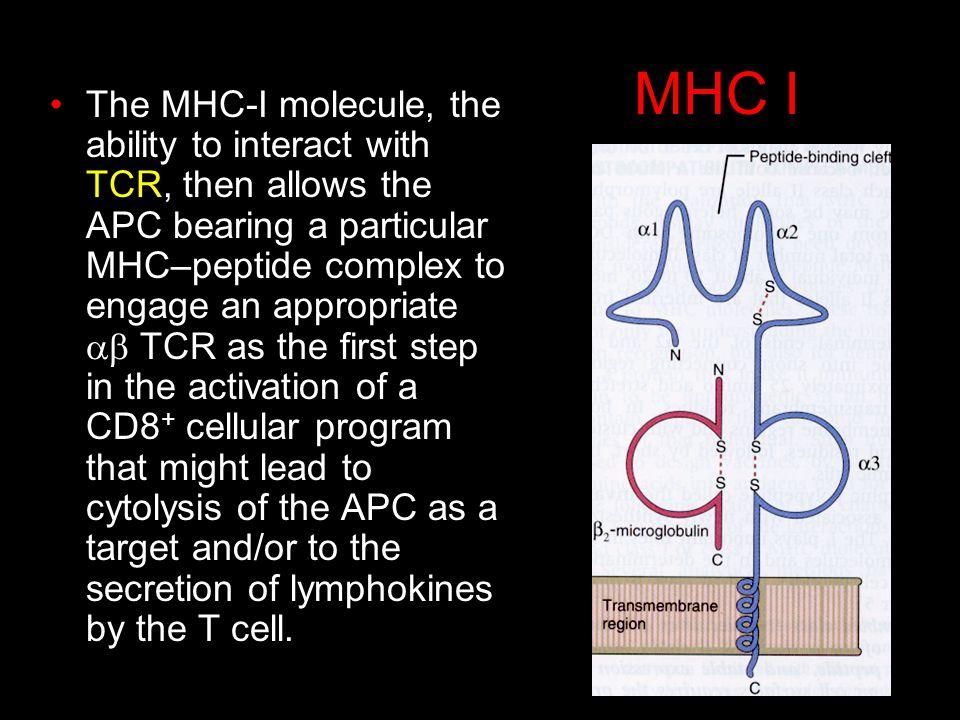 MHC I