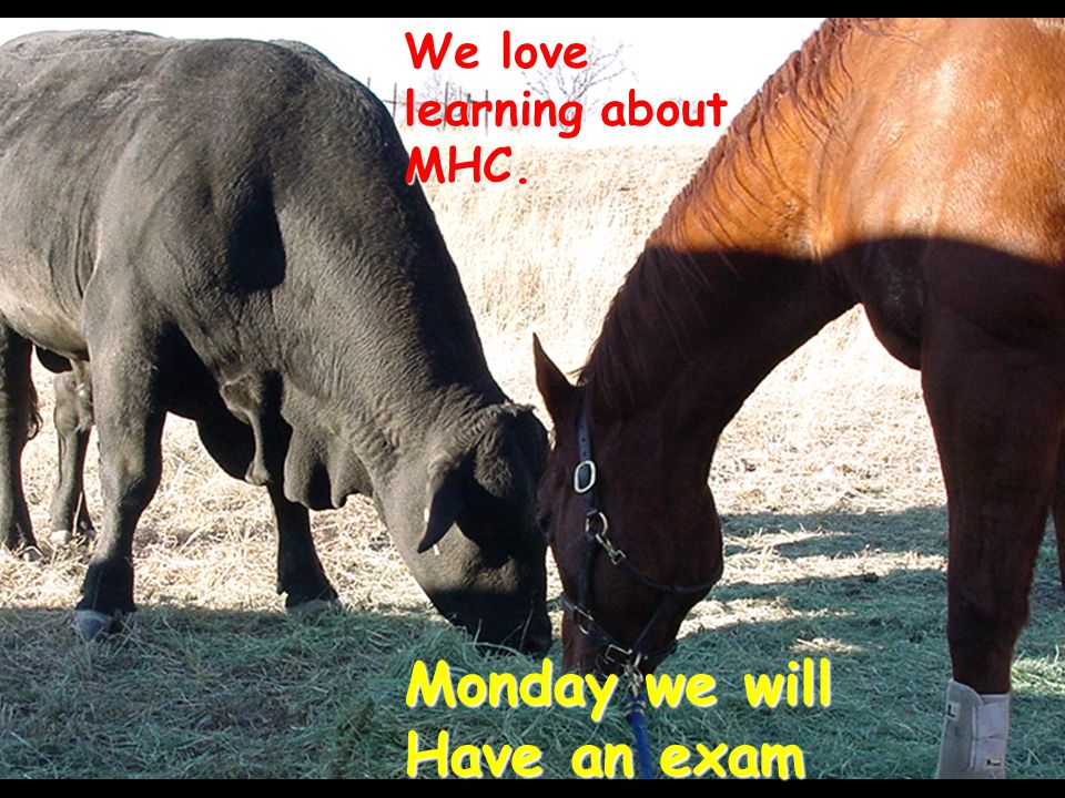 We love learning about MHC. Monday we will Have an exam