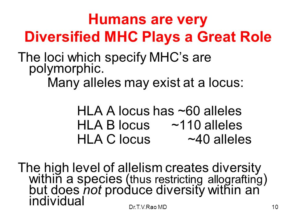 Humans are very Diversified MHC Plays a Great Role