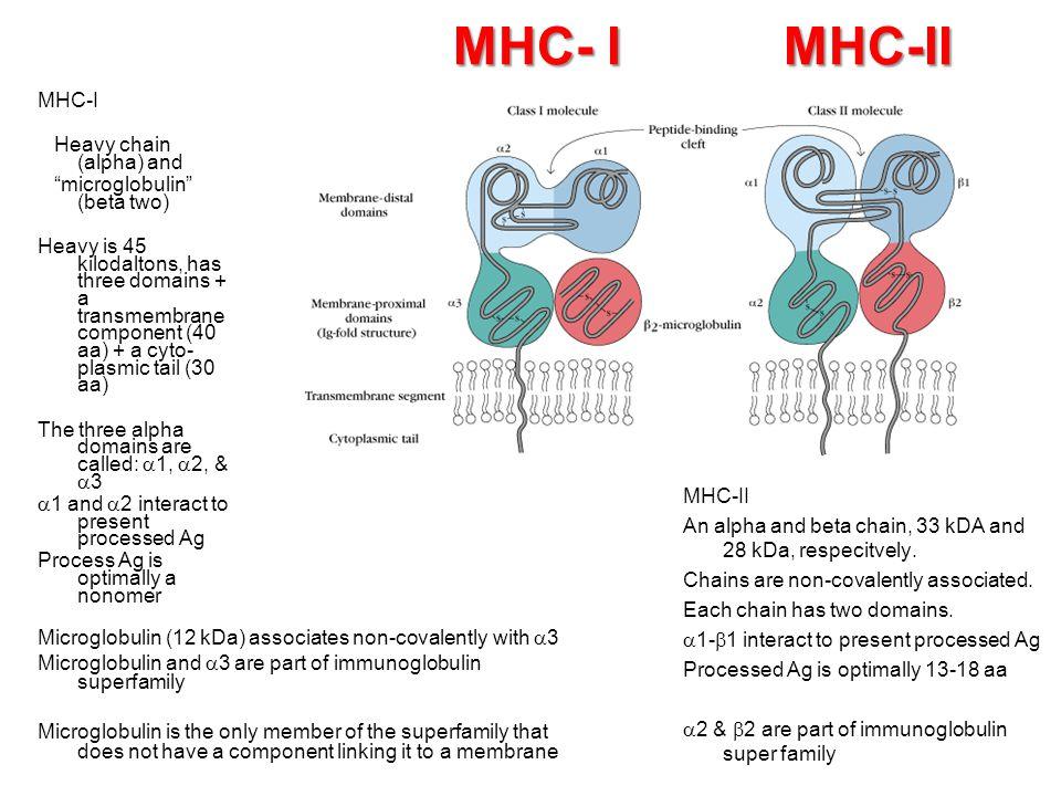 MHC- I MHC-II